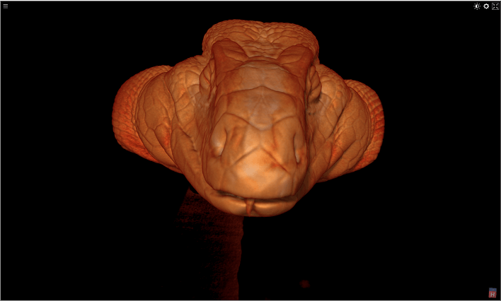 3D image #2 of soft tissue reconstruction for Star, a Tegu lizard