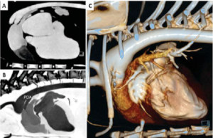 Scan and 3D Reconstruction with the Vimago HDVI-CT of a puppy with a congenital heart defect called PDA (Persistent Ductus Arteriosus)